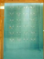 Screen for printing transfers of faces